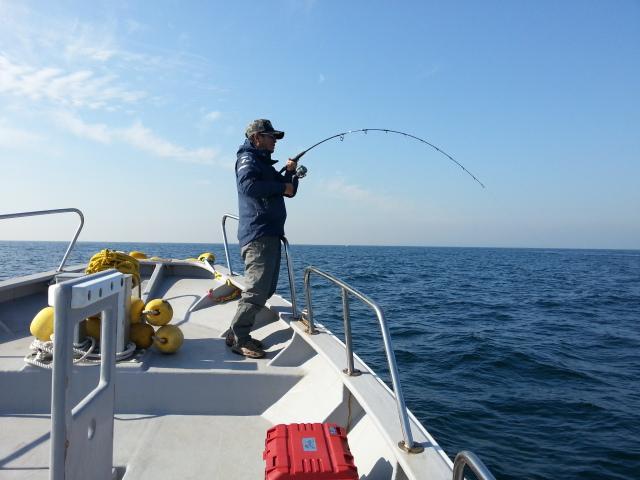 ハマチ釣り